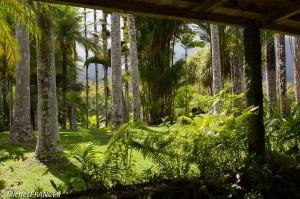 Martinique2013-136