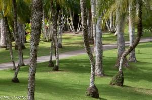 Martinique2013-138